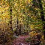 Herbst in der Ohligser Heide