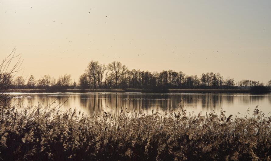 Goldene Stunde am Ochsenmoor (Dümmer See)