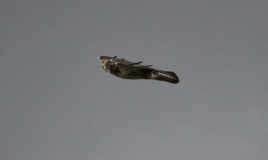 Vögel im Flug am Kemnader See