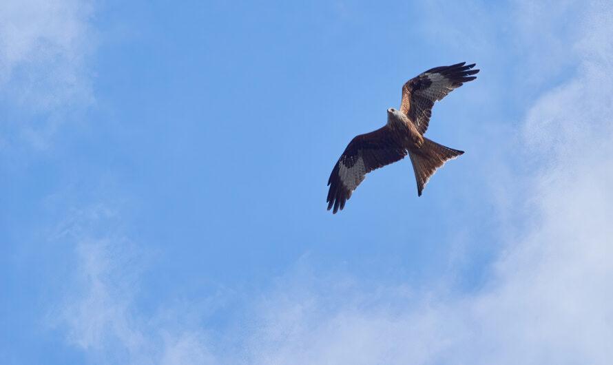 Viele Vögel und einiges mehr im Sauerland