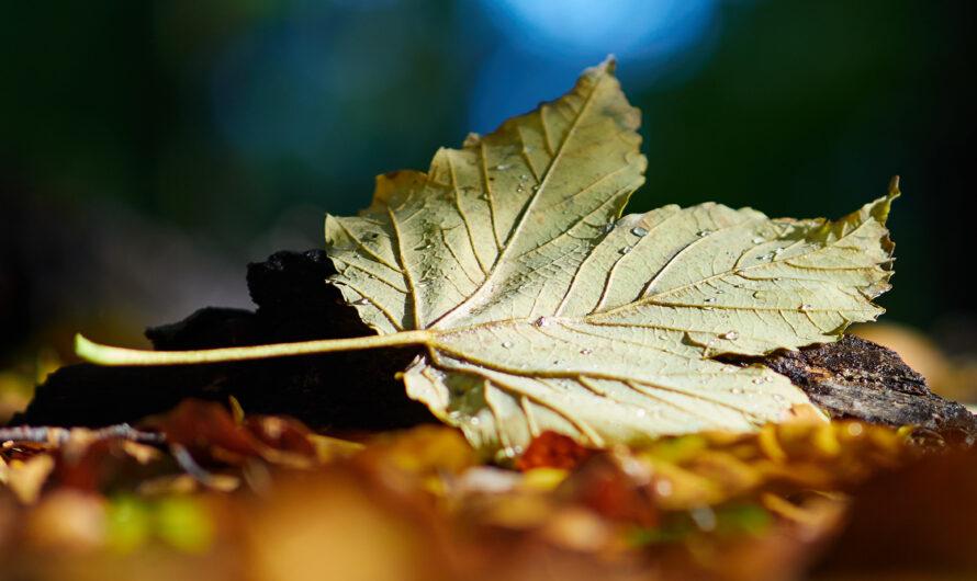 Herbstfotos im Wald