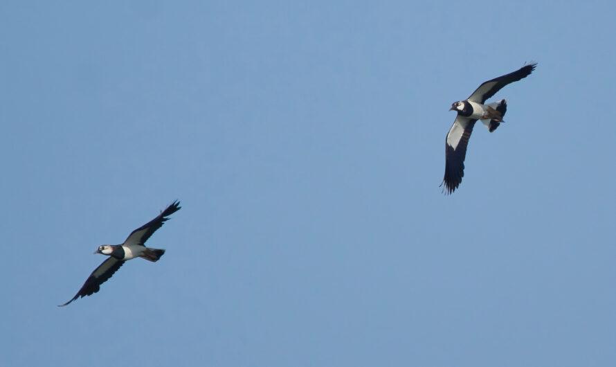Mal wieder Vogelbilder zur Brutzeit